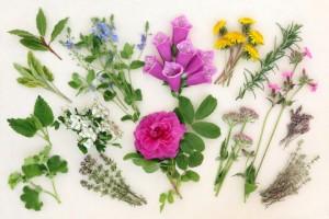 צמחי מרפא ירידה במשקל