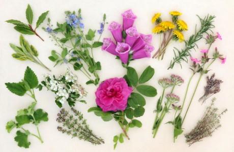 5 צמחי המרפא היעילים ביותר לירידה במשקל